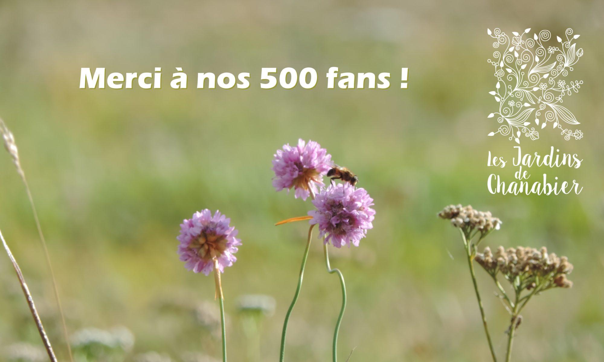 Merci aux 500 fans sur notre page Facebook