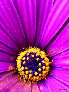 Fleur Mimi Léo